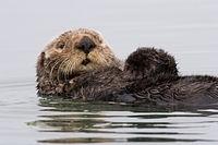 Estructura Para Baño Otter, Sistema Multi Ajustable2