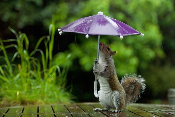 fotos interesantes del producto bajo la lluvia